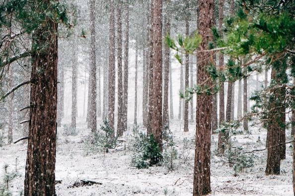 woods-690257_1280