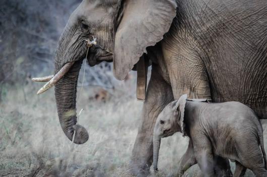 elephants-1081749_1920
