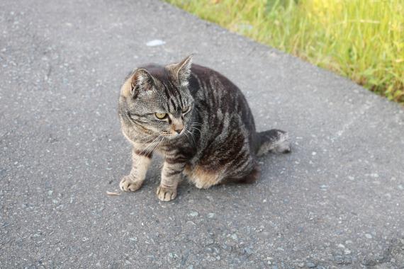 stray-cat-2330519_1920