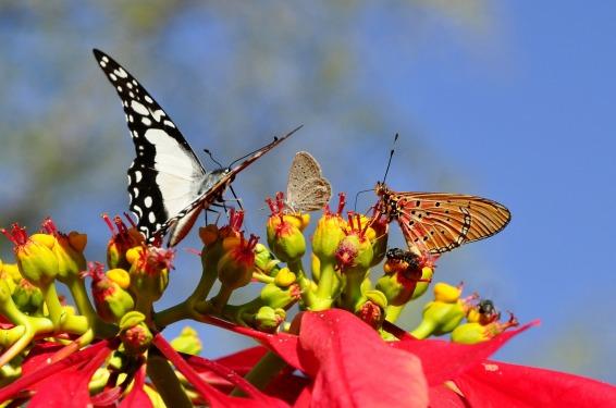 butterflies-55052_1920