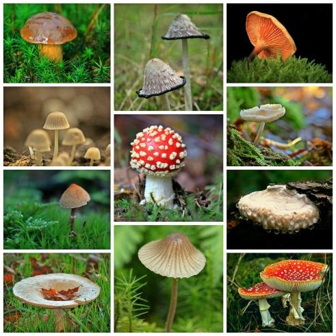 mushrooms-1798755_1920